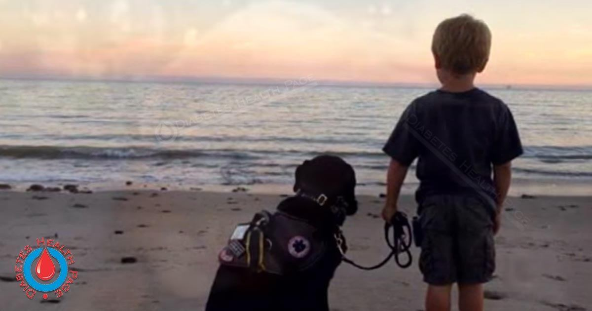 Dogs Sniffs Out Diabetes Threat And Saves a Boy's Life
