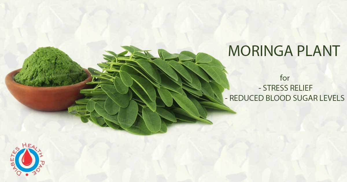 Moringa – The Herb That Can Help Reduce Blood Sugar Levels