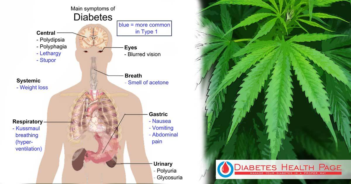 Can Cannabis Help with the Treatment of Diabetes?