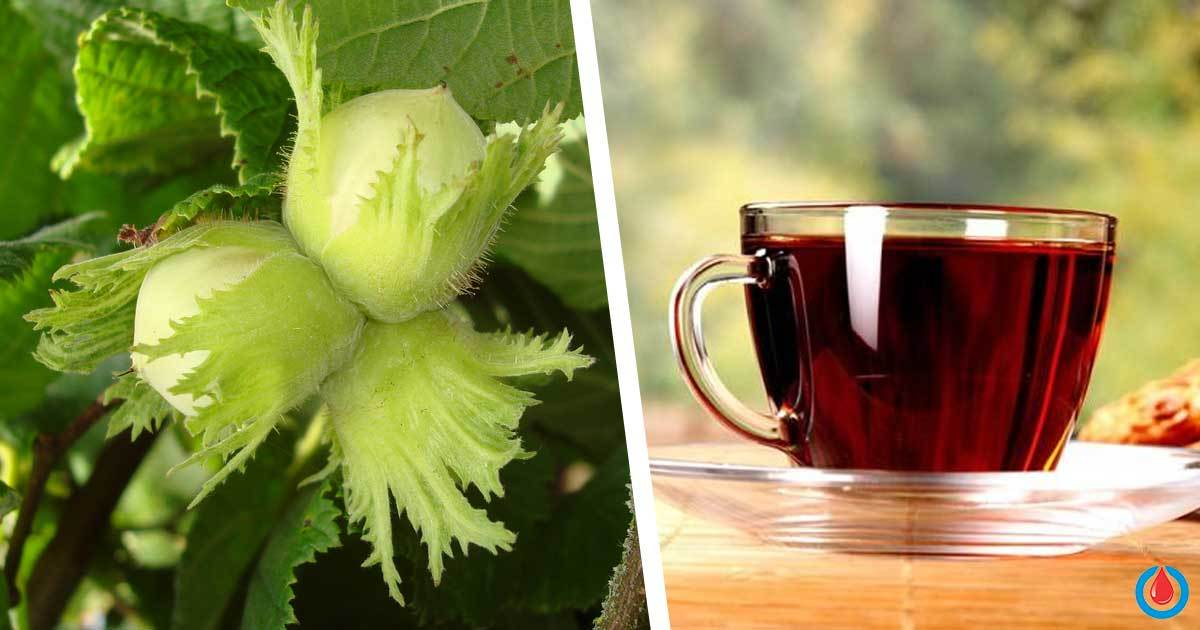 Use This Part of Hazelnut to Make a Remedy for Controlling Blood Sugar Levels