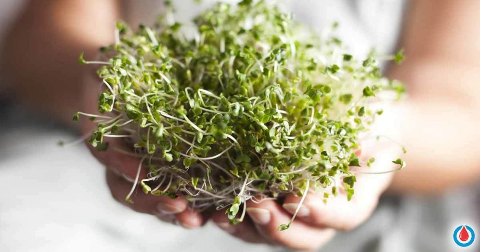 Broccoli Sprouts Extract Found to Have Remarkable Influence on Treating Type 2 Diabetes