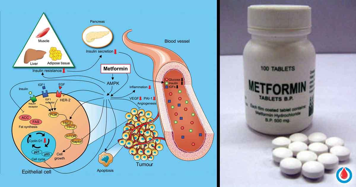 Perks And Side Effects Of Taking Metformin 101 All You