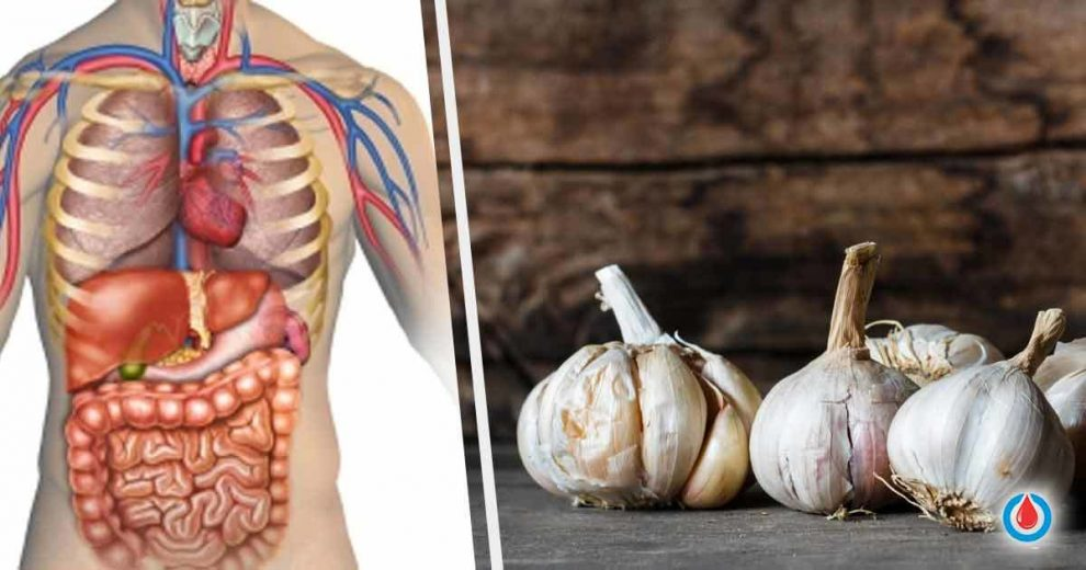 What Happens to Your Body When You Eat Garlic
