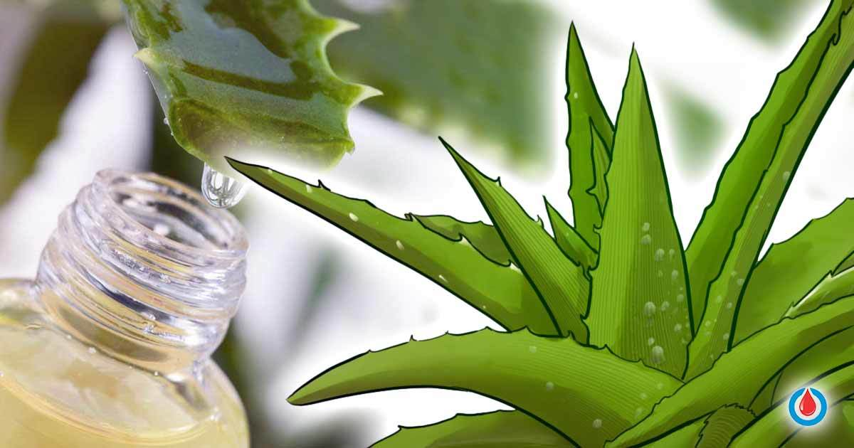 How to Use Aloe Vera to Regulate Blood Glucose Levels