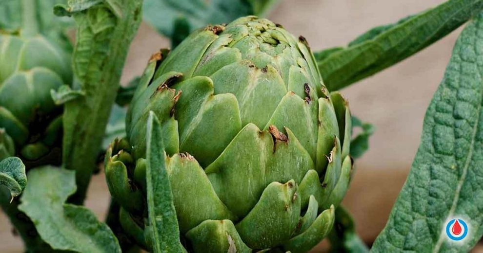 Here's Why You Should Start Eating Artichokes Today!