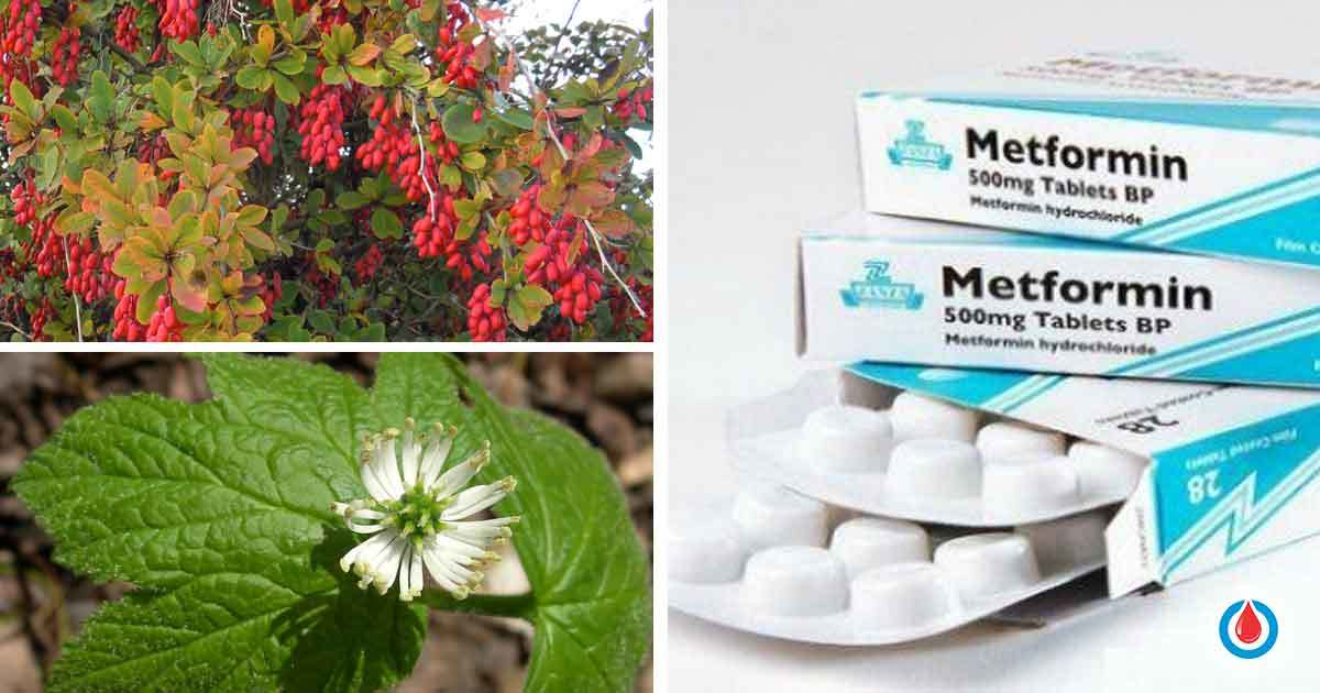 Berberine Compared to Metformin in the Treatment of High Blood Glucose