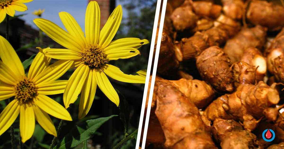 The Plant That Improves Digestion, Weight Loss, and Blood Sugar Levels