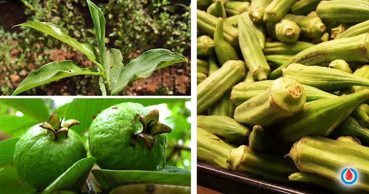 6 Plants That Can Help Control High Blood Sugar