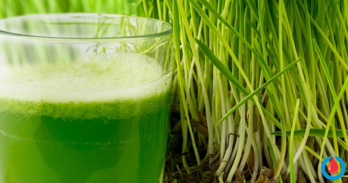 How to Make Wheatgrass Juice That Helps Lower Blood Sugar Levels
