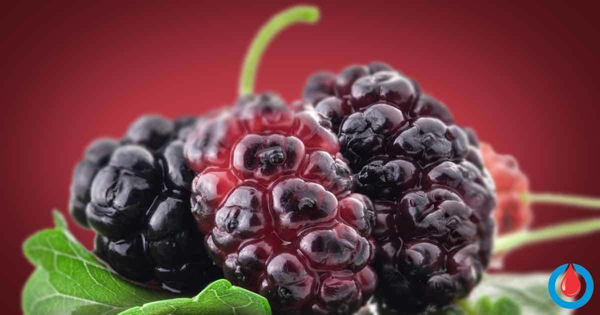 Could Mulberry Leaf Prevent Blood Sugar Spikes