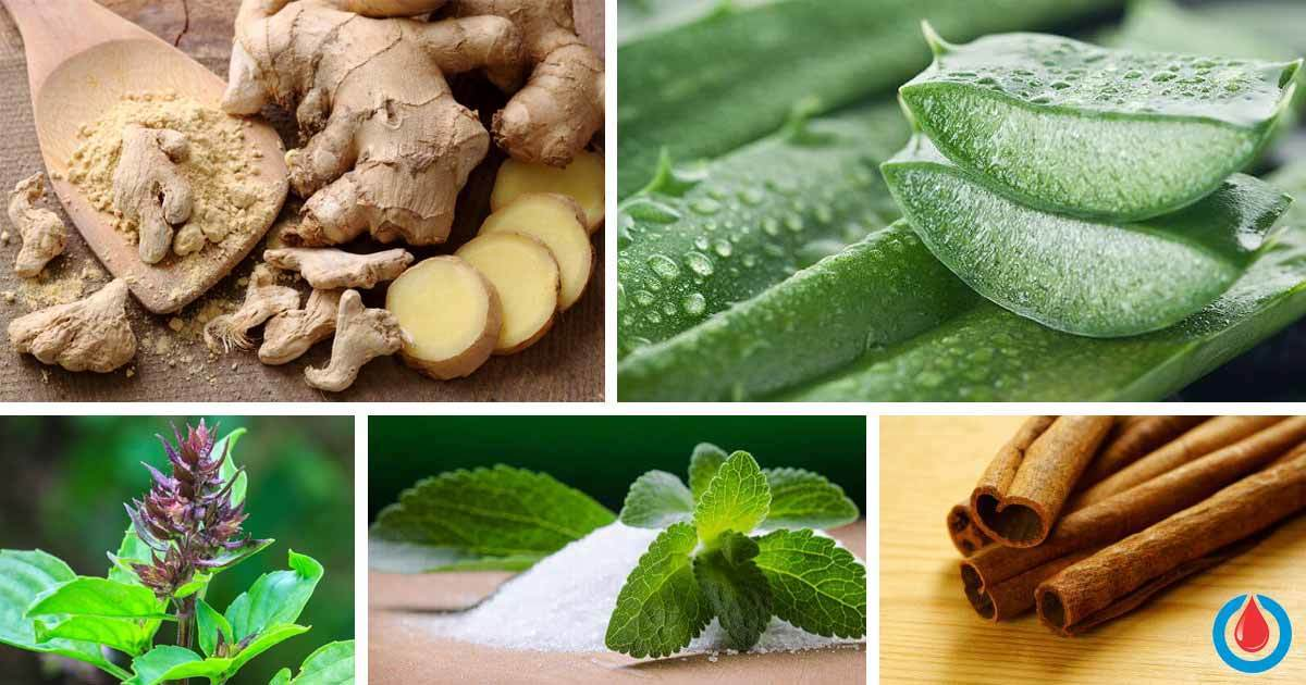 The Best 10 Herbs Which Reduce Blood Glucose Levels