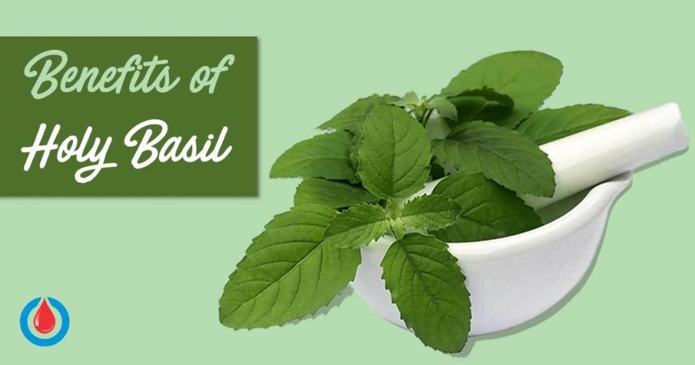 This Is Why You Need to Include Holy Basil in Your Diet