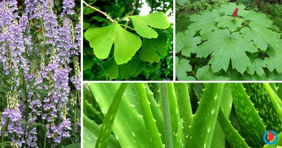 7 Fantastic Herbs for Blood Glucose Control