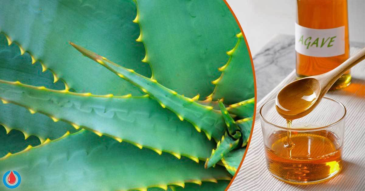 Does Agave Spike the Blood Sugar Levels
