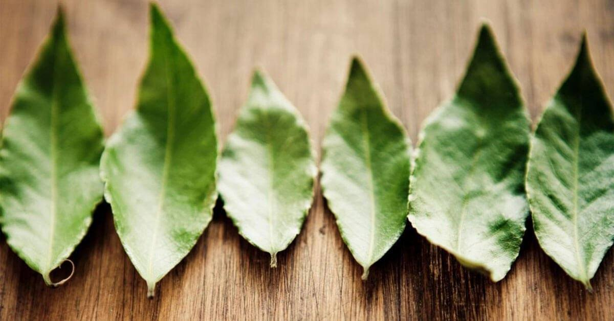 Can You Use Bay Leaves for Blood Sugar Control