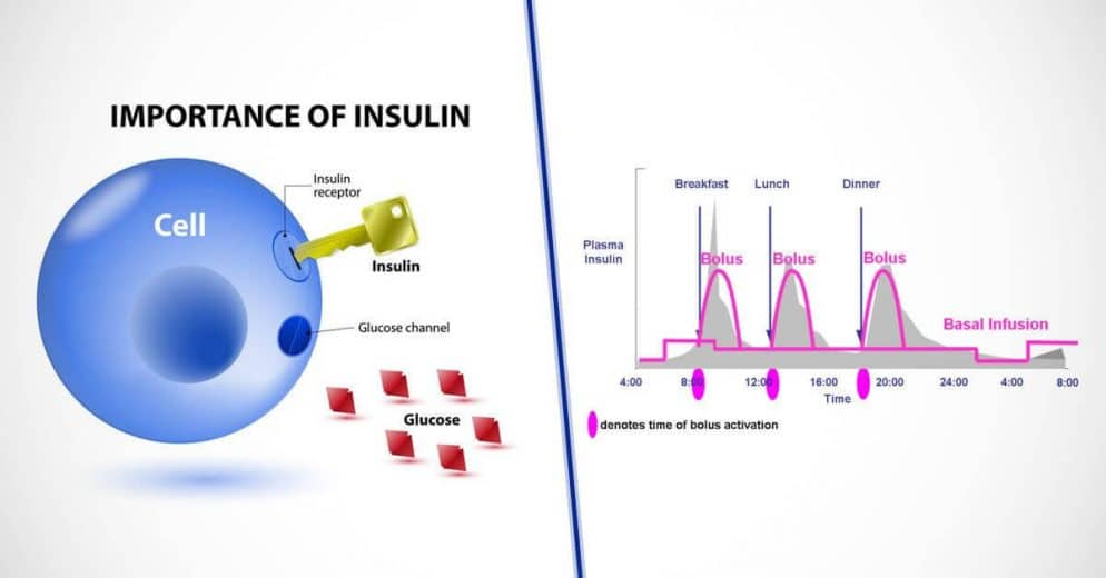 Insulin on Board How Does It Work
